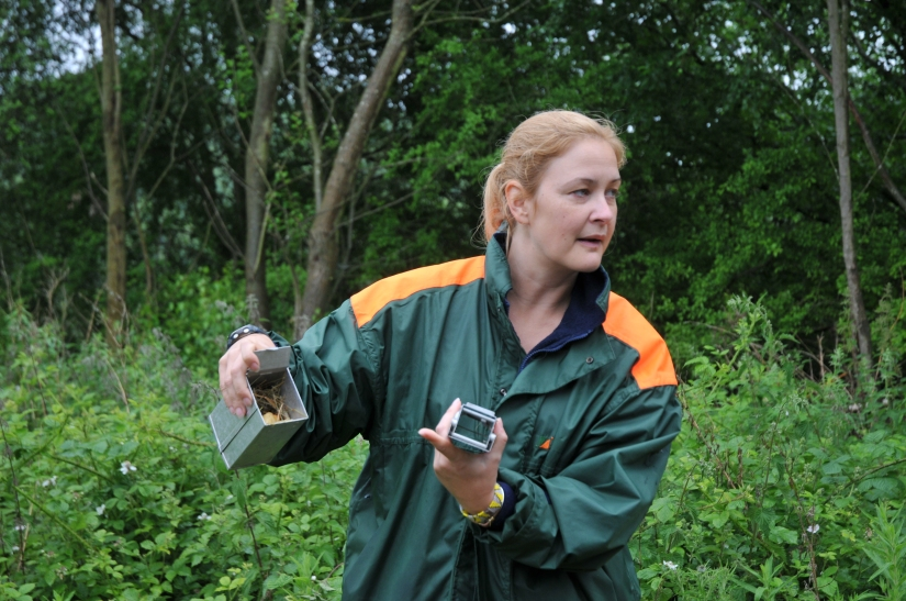 Tanya from Warwickshire Mammal Group explains how longworth traps work. The traps are filled with bedding material and food, and left overnight. When the small mammal walks in to take advantage of the feast the door closes the behind them, allowing surveyors to find out who is in there in the morning.