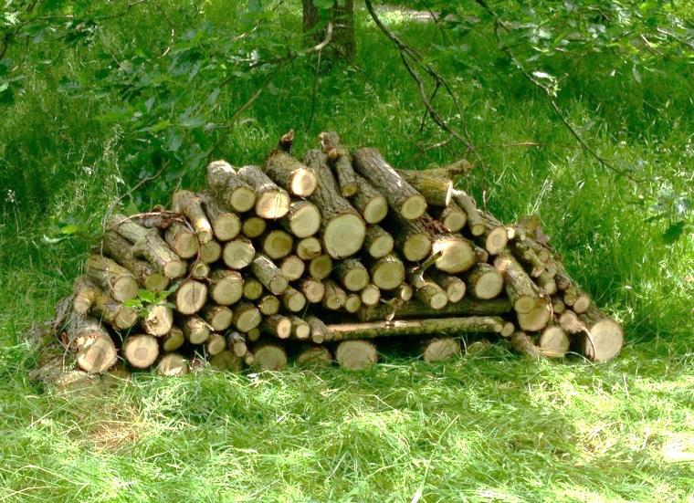 Log Pile Copyright Simon Thompson 2015